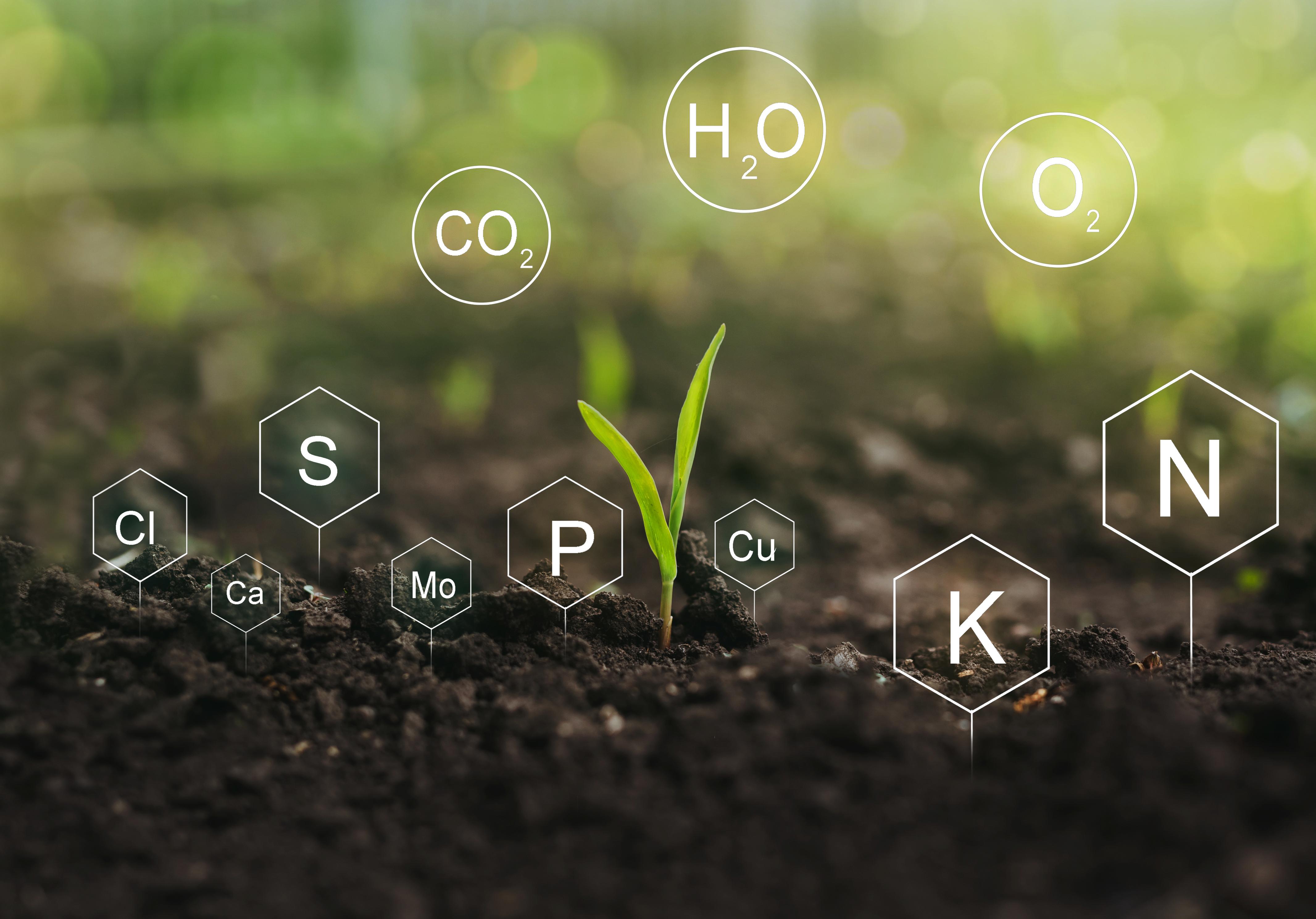 National Soil Information System