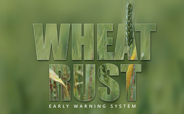 Wheat Rust Early Warning System - CSM Technologies